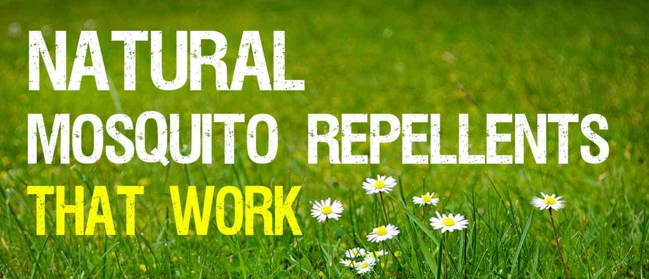 Reliable Alternatives To Chemical Repellents