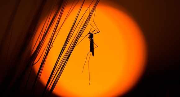 mosquito mosquito killer garden