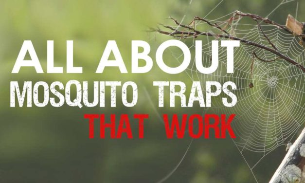 Mosquito Traps That Work: Discover the Best Recommendations for Mosquito Control