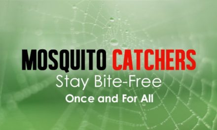 Mosquito Catchers: Stay Bite-Free Once and for All